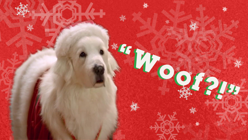 25 Days of Christmas - How Well Do You Know These Christmas Pets? - Up Next Thumb
